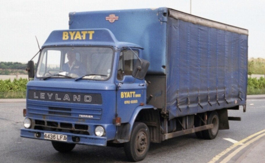 Leyland terrier photo - 10