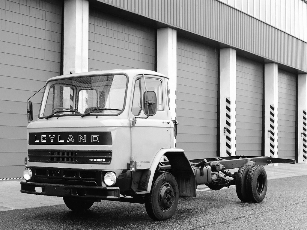 Leyland terrier photo - 2