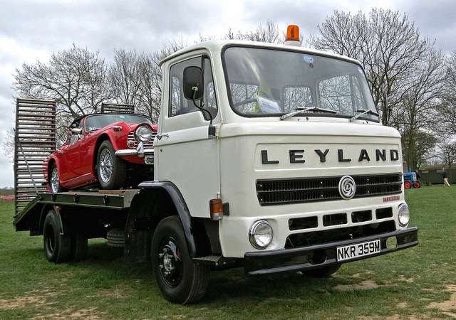 Leyland terrier photo - 3