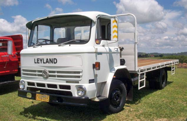 Leyland terrier photo - 5
