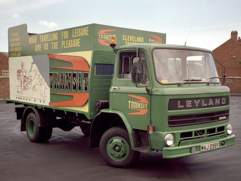 Leyland terrier photo - 6