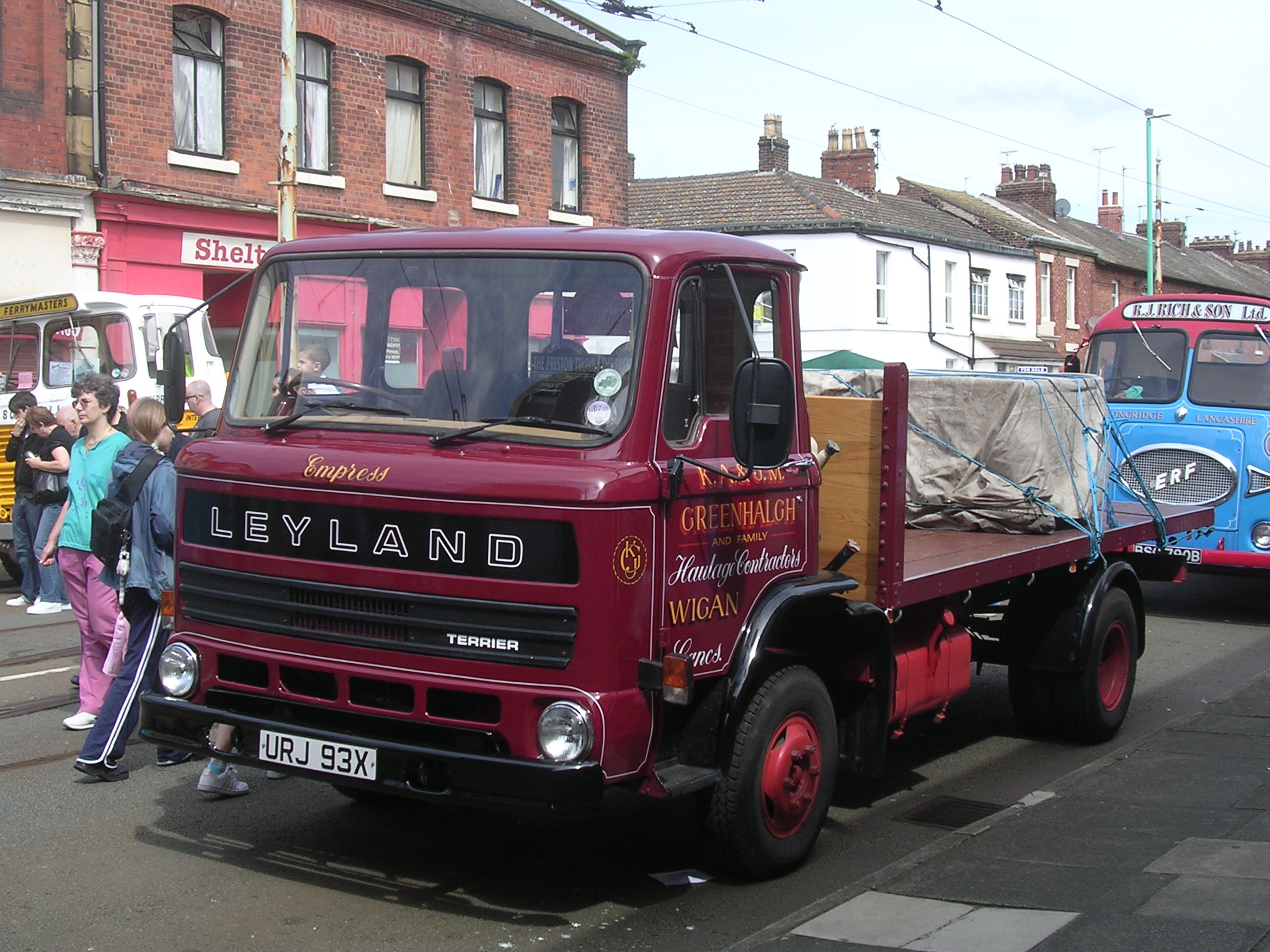 Leyland terrier photo - 7